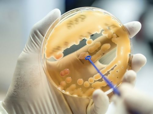 This flesh-eating superbug can kill you in days - and it's already inside your body