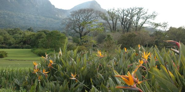 South Africa in Bloom: On the Flower Trail in Cape Town and Beyond