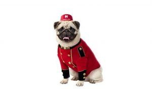 Hotels.com 'Reward Yourself' campaign with Bellpug mascot
