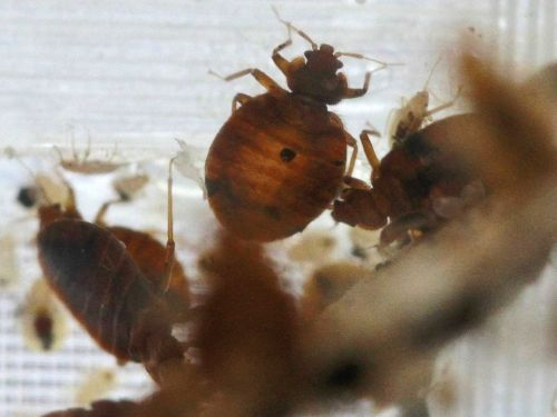 4 places you can get bedbugs from besides your bed