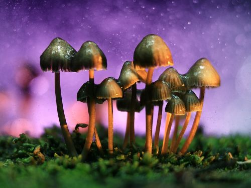 Psychedelic drugs are making a medical comeback over 50 years after the heyday of research on them - here's what changed