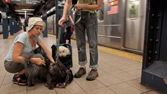 The New York Subway Has Become a Totalitarian Anti-Dog Police State
