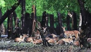 The Forest Department is all set to impose a 3-month ban on Sundarban tourism