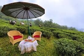 West Bengal plans to start tea tourism