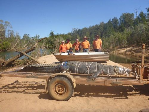A 1,300-pound 'monster' crocodile has finally been captured after a nearly decade-long hunt in Australia