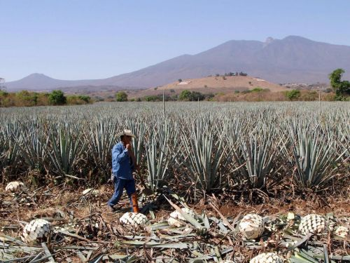 I tasted my way across Mexico's best tequila distilleries - here's what you should be drinking this summer