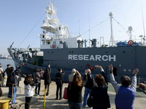 Japanese hunters killed more than 120 pregnant whales this year, all in the name of 'scientific research'