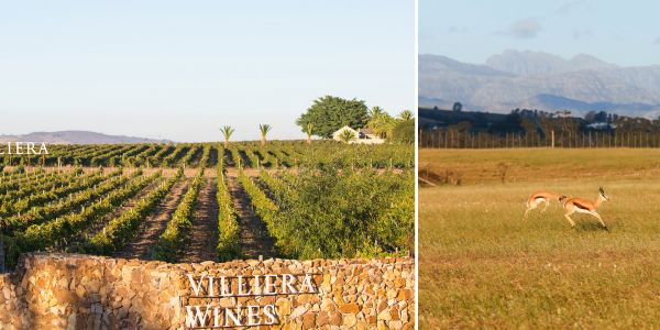These South African Wine Routes Offer So Much More Than Tastings