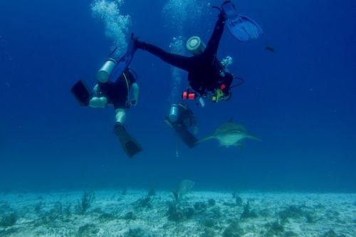 5 Surprising Things You Never Knew About Scuba Diving