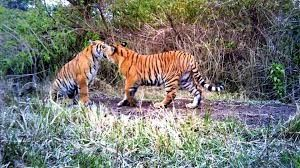 Uttarakhand plans to have two more tiger reserves soon