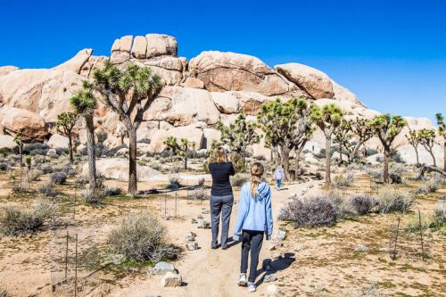 8 Awesome Things to Do in Joshua Tree National Park, California