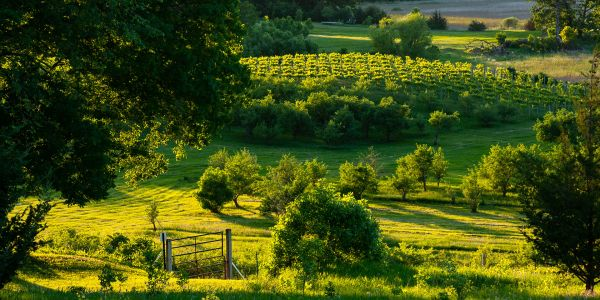 Cheers to That! 7 Unexpected Wine Regions to Explore in North America