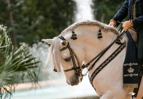 A Guide to Experiencing Spain's Equestrian Culture