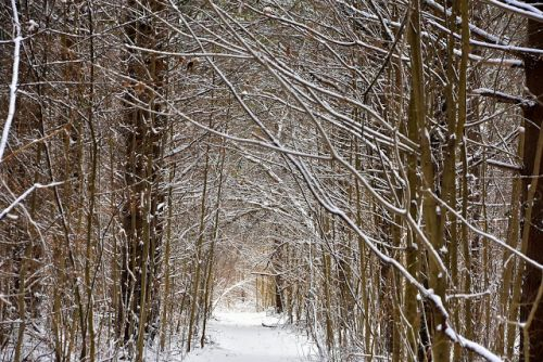 SNOW SQUALLS AND A SNOWY FORREST WALK