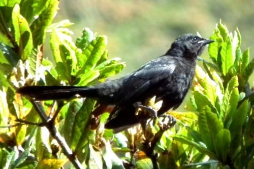 Easter Andes Birding