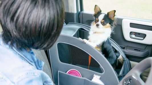 I Need Honda Japan to Start Selling Its Dog Accessories in the U.S
