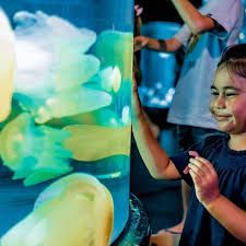 NSW: Discover weird and wobbly world of jellyfish in Jellyfish Garden