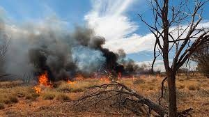Victorian Government launches Bushfire Recovery Fund