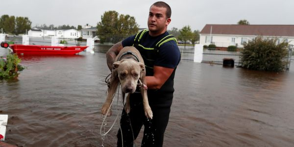 Heroes save pets left behind or stranded by Hurricane Florence