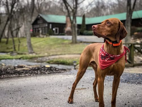 20+ Pet Friendly Cabins For Your Next Virginia Getaway