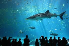 World's highest aquarium opens on Qinghai-Tibet Plateau