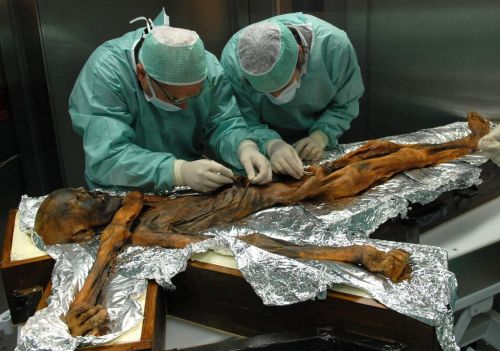 After 5,300 years, the last meal of an ancient Iceman has been revealed - and it was a high-fat, meaty feast