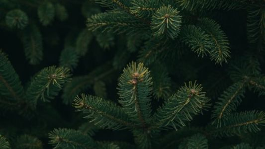 How To Clean Up Pine Needles Without Sacrificing Your Vacuum or Your Sanity