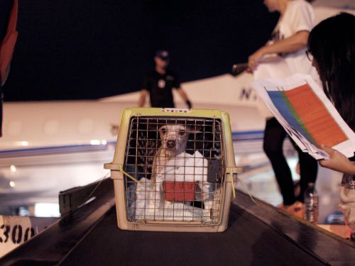 United is making sweeping changes to its pet policy and banning certain breeds of dogs from flying in the cargo hold