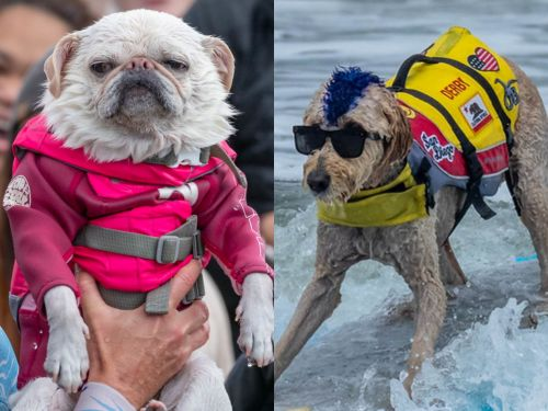 The 2018 World Dog Surfing Championships just took place, and the photos are the best thing you'll see all day