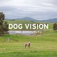 Victoria Launches World First Dog Optimised Tourism Campaign