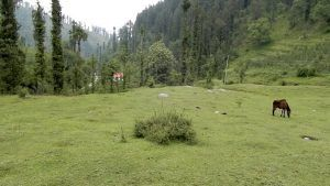 Himachal Pradesh Chief Minister announced development of Janjehli as eco-tourism destination