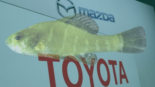 Why A Tiny Fish Is Stalling The New Toyota-Mazda Factory In Alabama
