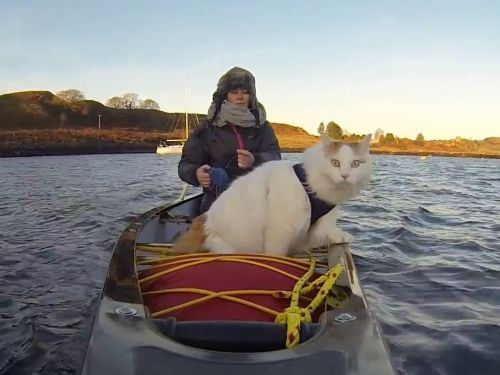 This cat lives on a boat - and the photos of his adventures will warm your heart