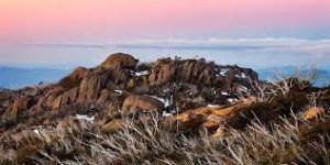 Campaign for forwarding the Mount Buffalo National Park onto the international tourism scene