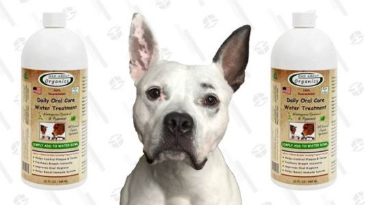 Breathe Easy, Mad About Organics Water Treatment Will Neutralize Your Good Boy's Bad Breath