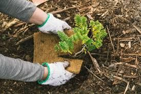 """Tourism New Zealand launches """"do-good, feel-good"""" campaign of planting trees"""