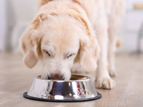 What you need to know before putting your pet on a vegan diet