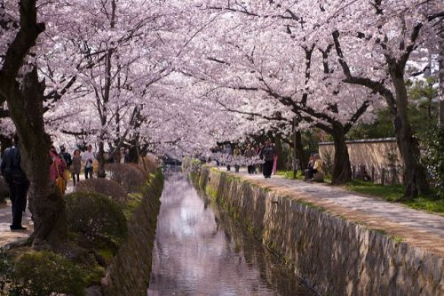 Tips for Cherry Blossom Season - Hanami Like a Local