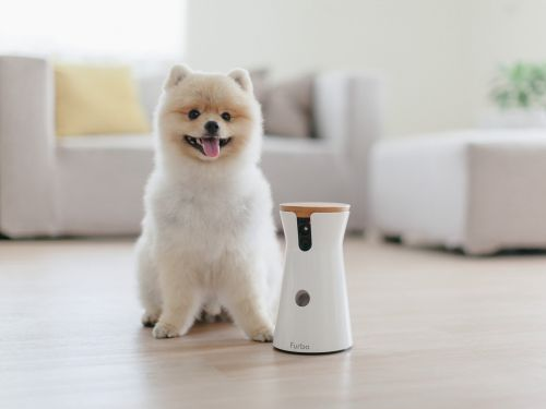 What it's like to use Furbo, the $199 dog camera that lets you remotely play with your pets and toss them treats