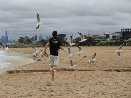 A man accused of kicking a seagull that ate his cheeseburger has been fined $124