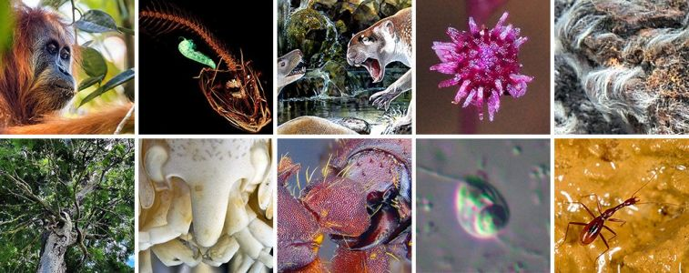 Scientists just discovered these 10 bizarre and beautiful animal species that show what it takes to survive on Earth against the odds
