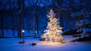 Silent night. All is calm - Christmas weather forecast for U.S