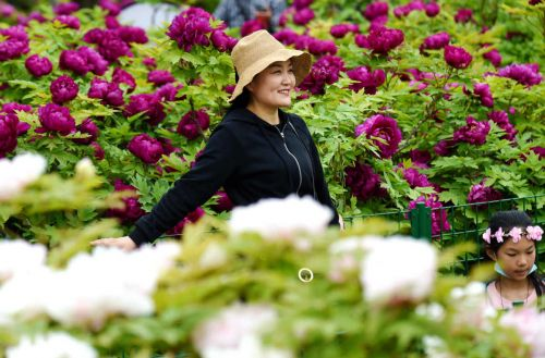 In Henan province, peonies are popular