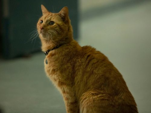 RANKED: 15 of the best movie cats of all time