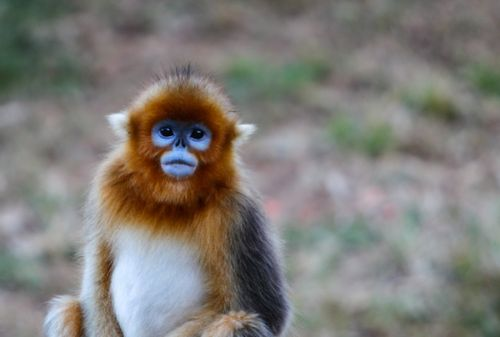 China's Monkey Paradise is a Hidden Gem for Family Travel