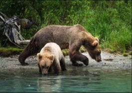 Embark on Alaskan Adventure Tours from Anchorage