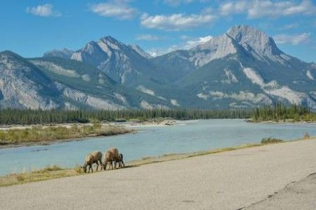Alberta national park collision kills six including two American tourists