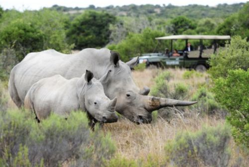 Celebrate World Rhino Day in South Africa