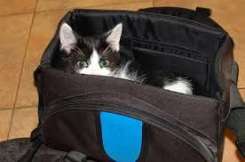 Woman kicked off British Airways after trying to smuggle her cat in hand luggage