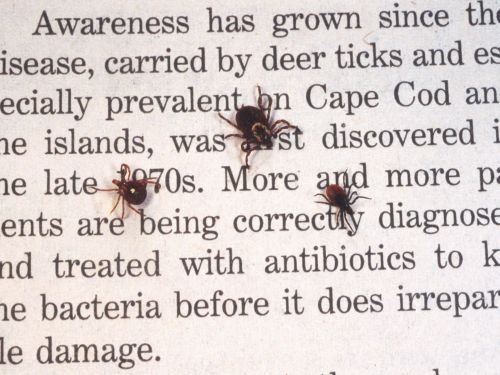 Lyme disease and other tick-borne illnesses are skyrocketing - here's how to know if you have Lyme disease
